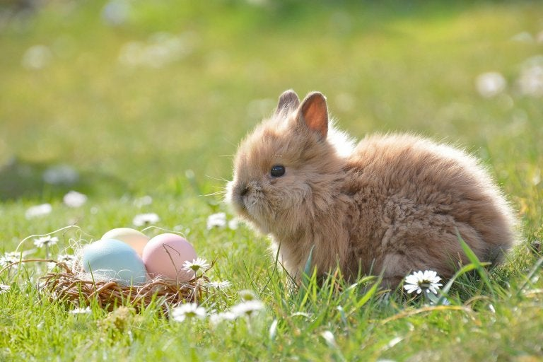 photo of bunny and basket with eggs in the grass